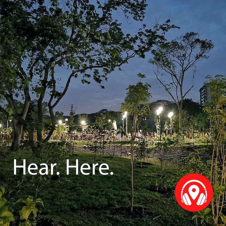 618641 Jurong Lake Garden Night - BB Alpha