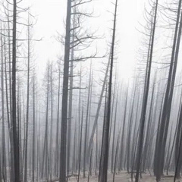 Quick Climate Links: Fire almost out, inhospitable 'moonscapes' remain Image